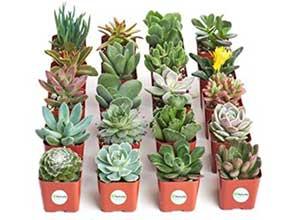 Unique Collection of 20 Live Plants